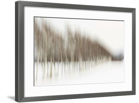 Birch Blur I-Larry Malvin-Framed Art Print