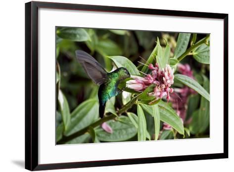 In Flight I-Larry Malvin-Framed Art Print