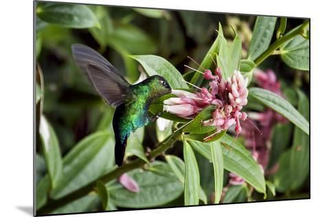 In Flight I-Larry Malvin-Mounted Photographic Print