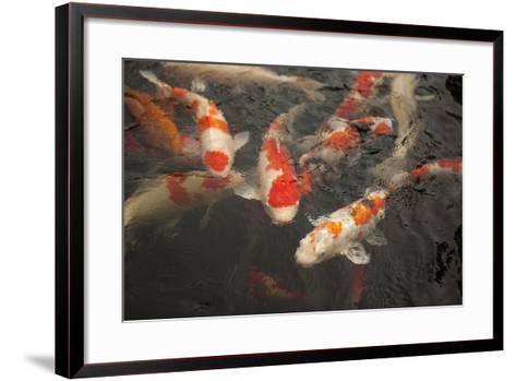 Koi I-Karyn Millet-Framed Art Print