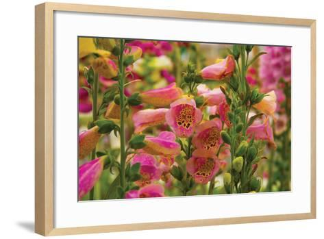 Purple & Yellow Bells-George Johnson-Framed Art Print