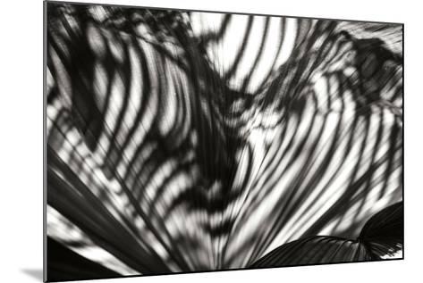Palm of Shadows-Alan Hausenflock-Mounted Photographic Print