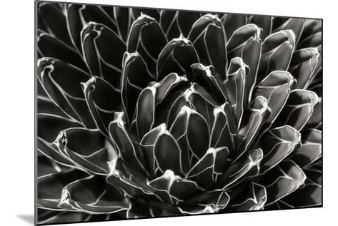 Patterned Succulent-Alan Hausenflock-Mounted Photographic Print