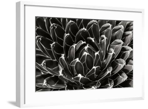 Patterned Succulent-Alan Hausenflock-Framed Art Print