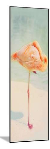 Resting Flamingo Panel-Roberta Murray-Mounted Photographic Print