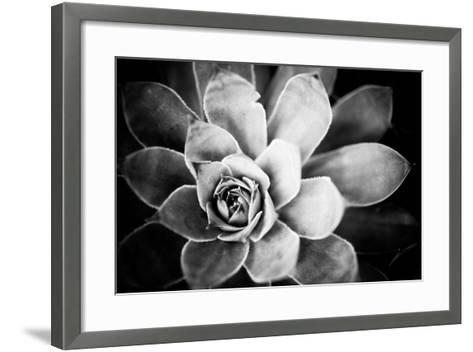 Monochrome Succulent IV-Erin Berzel-Framed Art Print