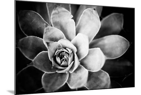 Monochrome Succulent IV-Erin Berzel-Mounted Photographic Print