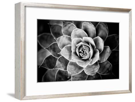 Monochrome Succulent V-Erin Berzel-Framed Art Print
