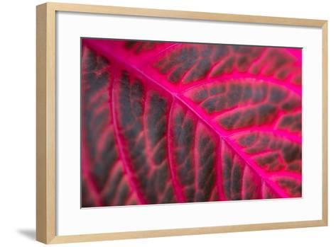 Pink Leaf II-Erin Berzel-Framed Art Print