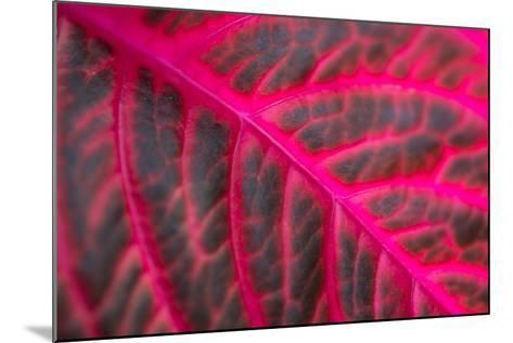 Pink Leaf II-Erin Berzel-Mounted Photographic Print