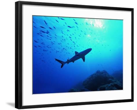 A Young Specimen of Gray Shark-Andrea Ferrari-Framed Art Print