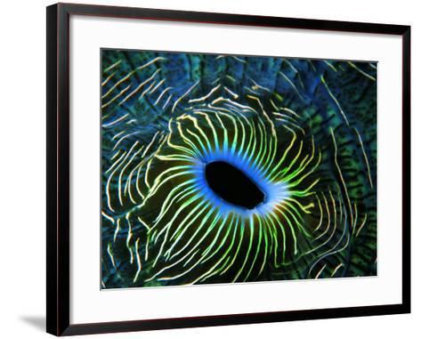 Bivalve of the Tridacna Genus-Andrea Ferrari-Framed Art Print