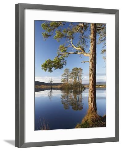 Island of Scots Pines Reflected in Loch Mallachie, Scotland-Mark Hamblin-Framed Art Print