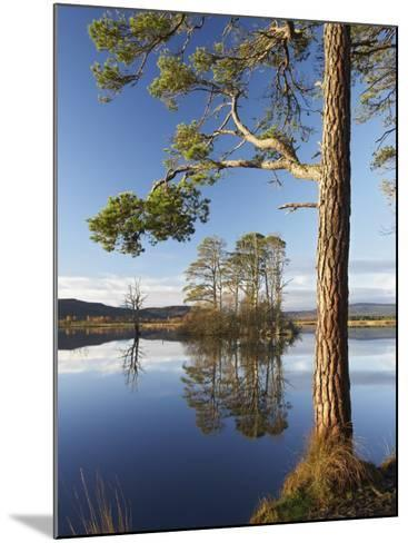 Island of Scots Pines Reflected in Loch Mallachie, Scotland-Mark Hamblin-Mounted Photographic Print