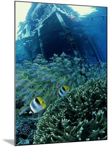 Reef Panorama Under Pier, French Polynesia-Tobias Bernhard-Mounted Photographic Print
