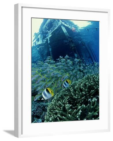 Reef Panorama Under Pier, French Polynesia-Tobias Bernhard-Framed Art Print