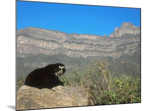 Spectacled Bear Male in Dry Forest Habitat, Peru-Mark Jones-Mounted Photographic Print