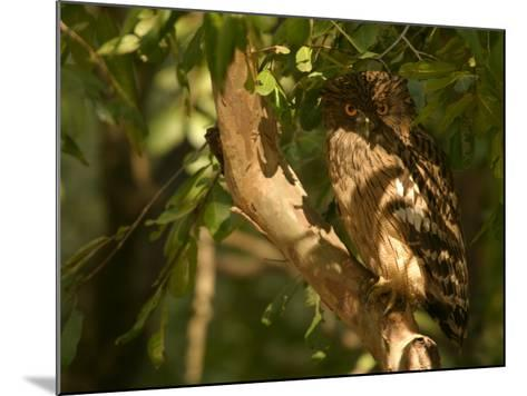 Brown Fish Owl, Owl Perched on Branch in Warm Dappled Light, Madhya Pradesh, India-Elliot Neep-Mounted Photographic Print