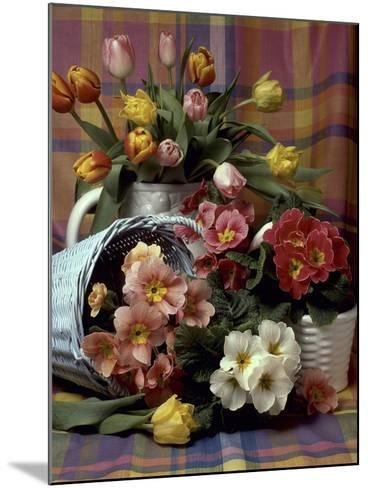 Primula and Tulipa, Vase and Basket on Ckecked Material-Erika Craddock-Mounted Photographic Print