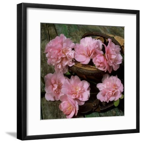 Pale Pink Camellia Flowers with Small Garden Trug and Secateurs on Rustic Table-James Guilliam-Framed Art Print