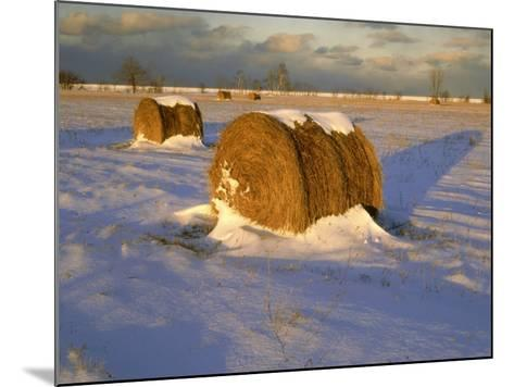 Field of Hay Rolls in Winter, Michigan, USA-Willard Clay-Mounted Photographic Print