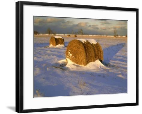 Field of Hay Rolls in Winter, Michigan, USA-Willard Clay-Framed Art Print