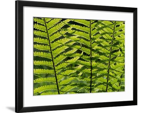 Male Fern, Inverness-Shire-Iain Sarjeant-Framed Art Print