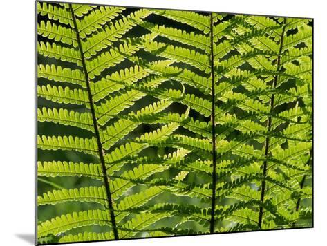 Male Fern, Inverness-Shire-Iain Sarjeant-Mounted Photographic Print