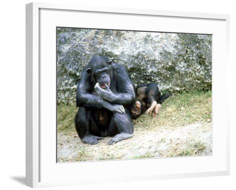 Chimpanzee, Mother & Baby, Zoo Animal-Stan Osolinski-Framed Art Print