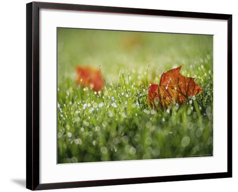 Fallen Autumn Leaf, Scotland-Iain Sarjeant-Framed Art Print