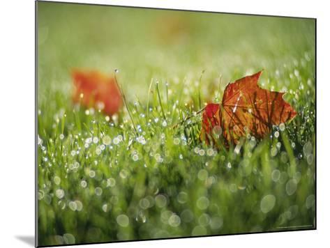 Fallen Autumn Leaf, Scotland-Iain Sarjeant-Mounted Photographic Print