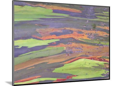 Rainbow Eucalyptus, Bark Pattern, Botanical Garden-Stan Osolinski-Mounted Photographic Print