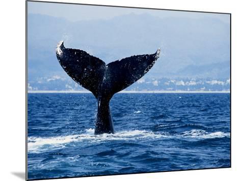 Humpback Whale, Raising Flukes-Gerard Soury-Mounted Photographic Print