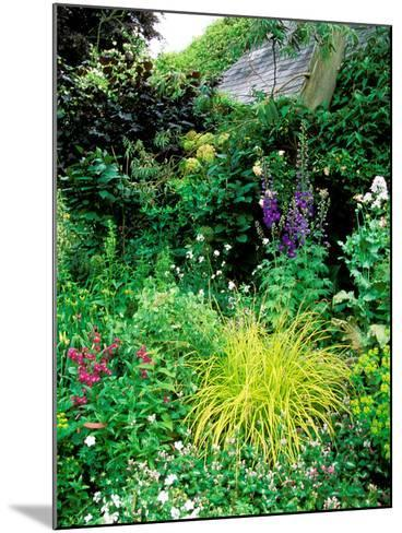 Country Garden with Colourful Perennials, Pond, Greenhouse and Statues, Sharcott Manor, Wiltshire-Lynn Keddie-Mounted Photographic Print