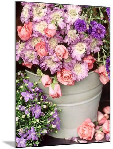 Summer Flowers in Bucket, Rosa, Scabiosa, Centaurea, Campanula-Lynne Brotchie-Mounted Photographic Print