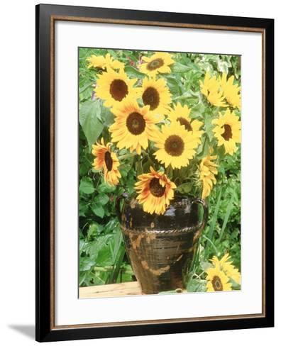 Helianthus (Sunflower) in Brown Glazed Jug, with Delphinium, on Table-Lynne Brotchie-Framed Art Print