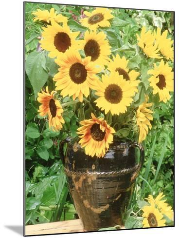 Helianthus (Sunflower) in Brown Glazed Jug, with Delphinium, on Table-Lynne Brotchie-Mounted Photographic Print