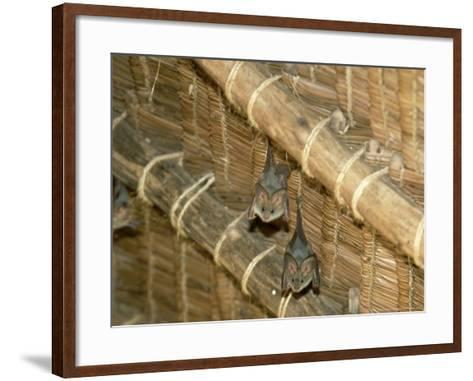 Yellow Wing Bats, Nairobi, Africa-David Cayless-Framed Art Print