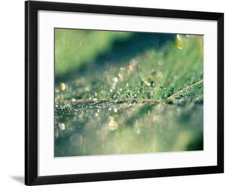 Water Droplets on Rib of Leaf-Lynn Keddie-Framed Art Print