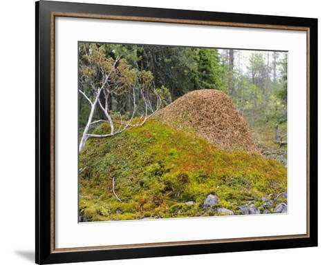 Ant Hill, Kuusamo Area, Northeast Finland-Philippe Henry-Framed Art Print
