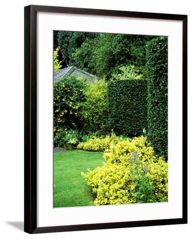 Beech Hedging with Bright Yellow Variegated Euonymus at Base-Lynn Keddie-Framed Art Print