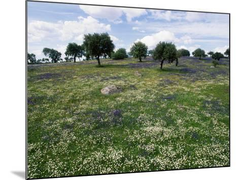 Flowering Meadow with Quercus Ilex, Extremadura, Spain-Olaf Broders-Mounted Photographic Print