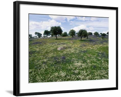 Flowering Meadow with Quercus Ilex, Extremadura, Spain-Olaf Broders-Framed Art Print