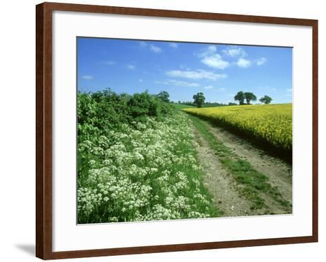 Farmland Habitat, Cow Parsley, England (May)-Mark Hamblin-Framed Art Print