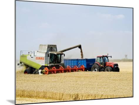 Combine Harvester Unloading Grain into Trailer, England-Martin Page-Mounted Photographic Print