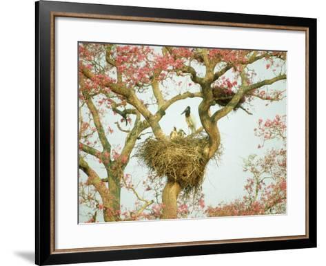 Jabiru Stork at Nest, Brazil-Richard Packwood-Framed Art Print