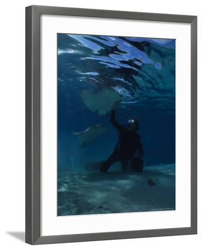 Hawai Sting Ray, with Diver, Polynesia-Gerard Soury-Framed Art Print