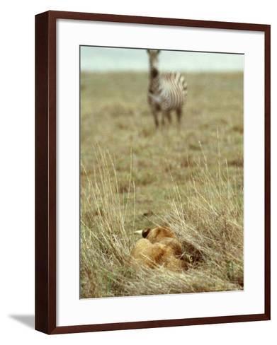 African Lion, Lioness in Ambush, Tanzania-John Downer-Framed Art Print