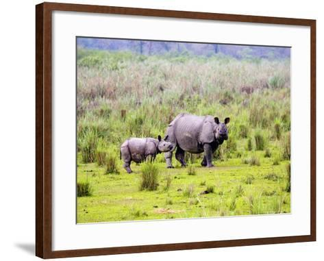 Indian Rhinoceros, Mother and Calf, Assam, India-David Courtenay-Framed Art Print