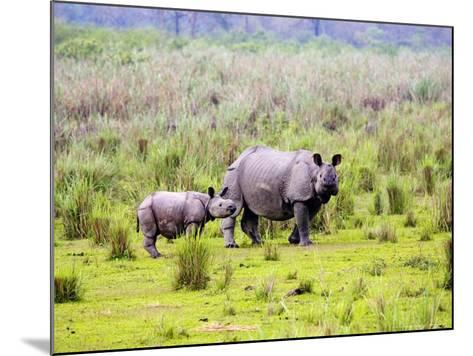 Indian Rhinoceros, Mother and Calf, Assam, India-David Courtenay-Mounted Photographic Print